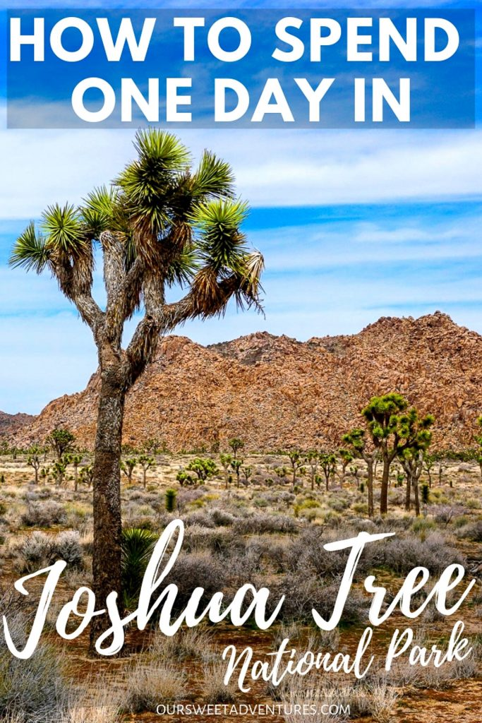 """A photo with a tall Joshua tree on the left side and several more in the background with text overlay """"How to Spend One Day in Joshua Tree National Park""""."""