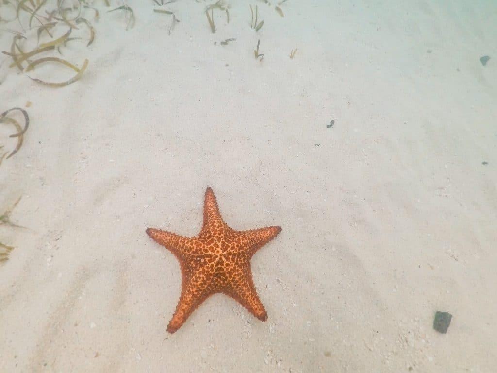 An orange starfish on white sand in the ocean.
