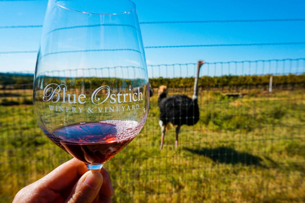 A glass of red wine from Blue Ostrich with an ostrich in the background.